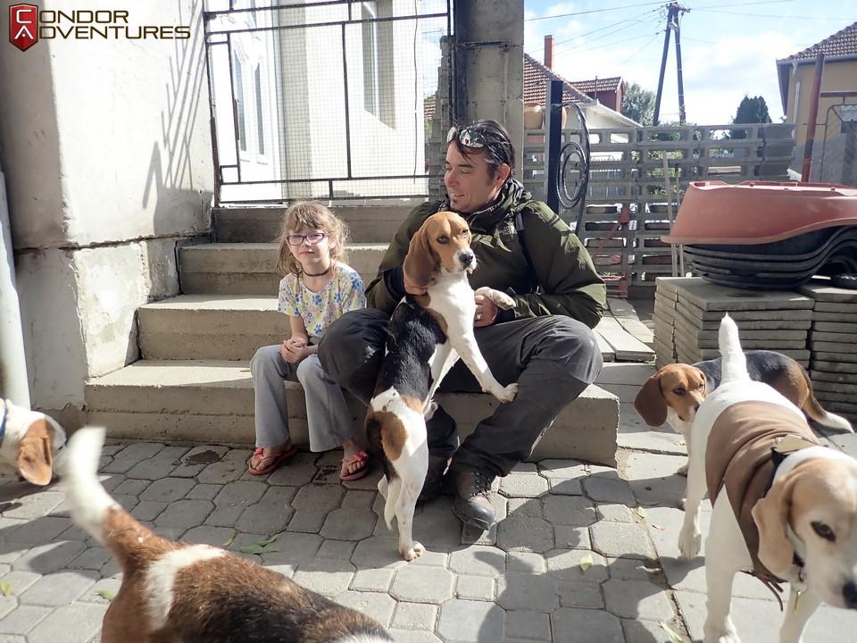 biker dog-brigi-explorealbania-motoros túra-condorriders-beagle fajtamentés